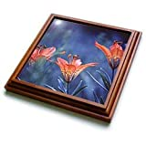 Alberta, Jasper National Park. Wood lily flowers-CN01 BJA0004 - Janyes Gallery - 8x8 Trivet With 6x6 Ceramic Tile