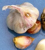 Garlic: In Season Guide
