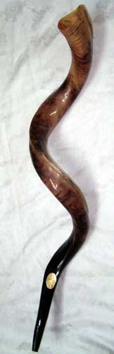Kudu Yemenite HORN SHOFAR Kosher All Polished approx 35