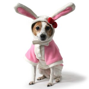 Easter Bunny and Ears Dog Set - Medium