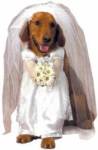 Amazon Pet Wedding Bride Dog Costume Size Small Clothing