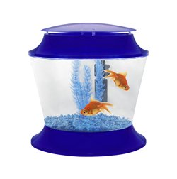 Starter Kit Blue Goldfish Bowl Set Up For Children Aquatic
