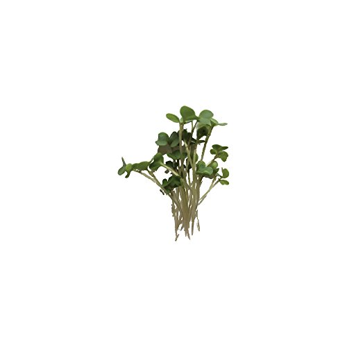 Lila's Garden Microgreens - Sunflower Shoots