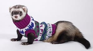 Marshall Ferret Sweater, Colors May Vary