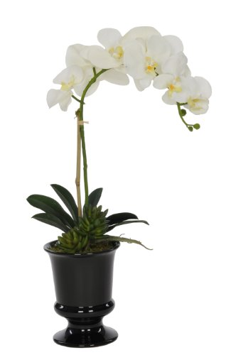 Artificial White Phalaenopsis Orchid in Black Ceramic Urn