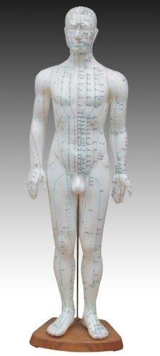 Male Model/Height 24