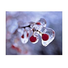 Ice-Covered Berries