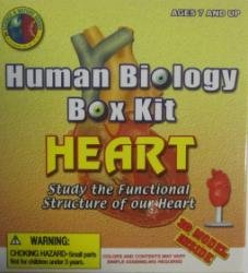 Human Biology Kit - HEART by CARLISLE - 1