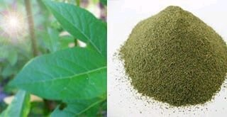 Can Kratom Cause High Blood Pressure
