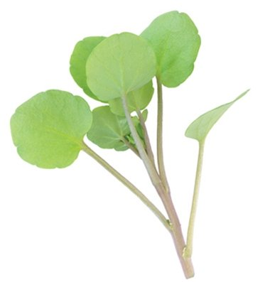 Cress Watercress D384A (Green) 500 Seeds By David'S Garden Seeds