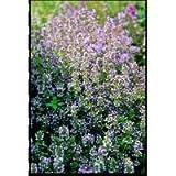 Kings Seeds Herb Thyme Perennial