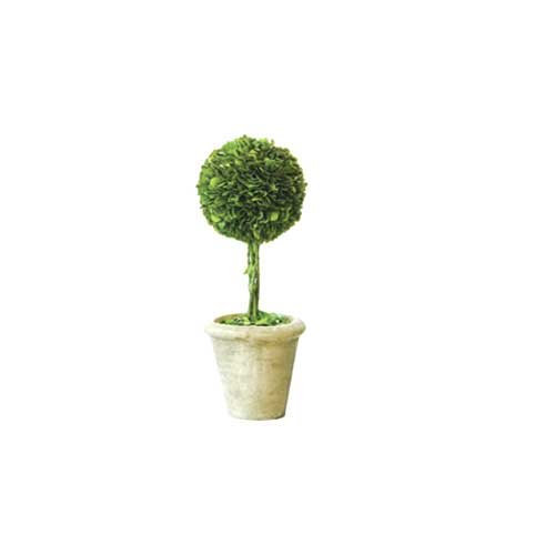 Preserved Boxwood Topiary Single 12