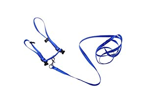 Adjustable Small Nylon Kitty Harness with 4' Leash - Blue