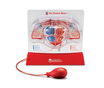 "Learning Resources Pumping Heart Model, 12"" Length x 11"" Width x 5"" Depth from Learning Resources"
