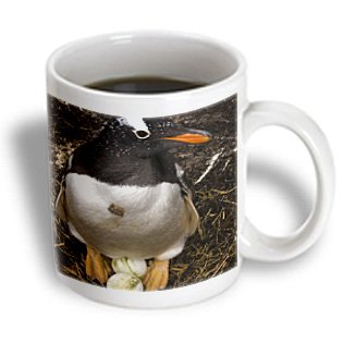 Danita Delimont - Penguins - Gentoo Penguin, Pebble Island, Falkland Islands - Sa09 Pox0081 - Pete Oxford - 15Oz Mug (Mug_86506_2)