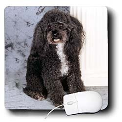Dogs Poodle - Black and white Toy Poodle - Mouse Pads
