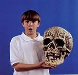 Skull Giant Prop