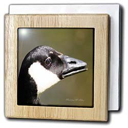 Canada Goose - Bird Photography - 6 Inch Tile Napkin Holder
