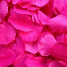 200 Pink/Fuchsia Silk Rose Petals Wedding Party Favors