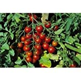 Vegetable - Kings Seeds - Pictorial Packet - Tomato - Sweet million F1