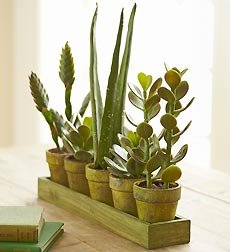 Flowers by 1800Flowers - Artificial Succulents/Aloe Plants on Green Tray