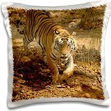 Tigers - India, Kanha National Park, Bengal Tiger 16x16 inch Pillow Case