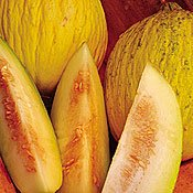 Buy Organic Sungold Casaba Melon 35 Seeds – Sweet and Juicy – FREE SHIPPING ON ADDITIONAL HIRTS SEEDS ORDERED & PAID WITH ONE PAYMENT!