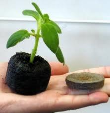 150 Jiffy 7 Peat Pellets 30mm - Seeds Starting - Jiffy Peat Pellet Helps to Avoid Root Shock