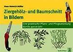 Ziergeh�lz- und Baumschnitt  in Bilde...