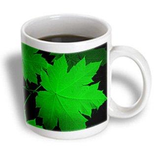 Danita Delimont - Michael Scheufler - Leaves - Usa, Kansas, Oak Leaves In The Light. - 15Oz Mug (Mug_191570_2)
