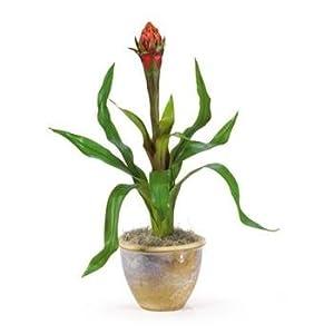 Single Flame Bromeliad Silk Arrangement