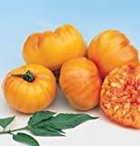 Beefsteak Tomato Striped German D2372A (Red Yellow) 25 Organic Heirloom Seeds by David's Garden Seeds Red and Yellow