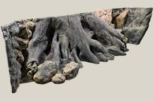aquarienruckwand-amazonas-200x60cm