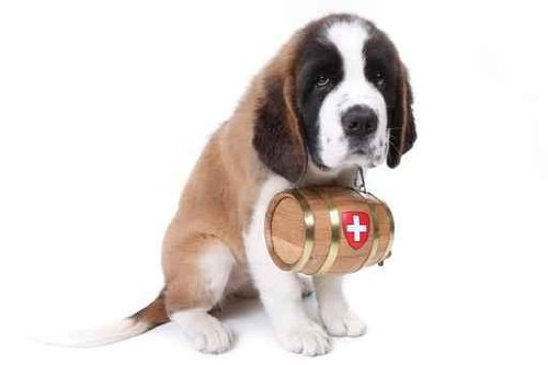 Animal Wall Decals A Saint Bernard Puppy With Rescue Barrel Around The Neck - 72 Inches X 48 Inches - Peel And Stick Removable Graphic front-808799