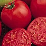 Bucks County Tomato 30 Seeds - Best Tomato 1999