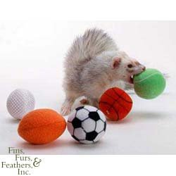 Marshall Pet Products Ferret Sport Balls