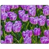 msd-in-gomma-naturale-gaming-mouse-immagine-id-28408190-plenty-di-luce-lilla-tulipani-all-aperto-in-