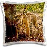 Tigers - India, Bandhavgarh Park, Bengal Tiger 16x16 inch Pillow Case