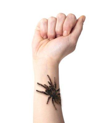 Creepy Tarantula Temporary Tattoo Pack - Two