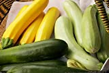 Zucchini Tricolor Jade Gold and Emerald Seeds 20 Seeds