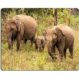 luxlady-gaming-tapis-de-souris-dimage-22451717-un-petit-elephant-mollet-est-se-cacher-derriere-sa-me