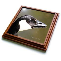 Canada Goose - Bird Photography - 8x8 Trivet With 6x6 Ceramic Tile