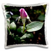 Light pink rose bud getting ready to open - 16x16 inch Pillow Case