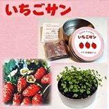 リトルガーデン いちごサン ワイルドストロベリー栽培セット