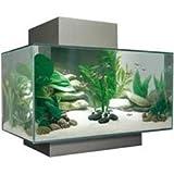 how to aquarium freshwater and saltwater aquarium fish