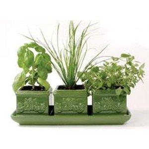 Toysmith Italian Herb Trio Green Ceramic Window Set of 3 Stoneware