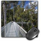 danita-delimont-paths-airwalk-paths-tahune-forest-tasmania-australia-au01-dwa3861-david-wall-mousepa