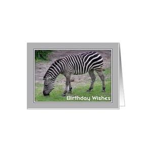 Amazon.com: Birthday - Zebra Card: Health & Personal Ca