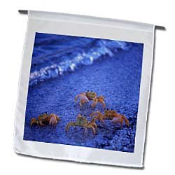 Four yellow ghost crabs walking on the beach. Shark Bay, Western Australia - 12 X 18 Inch Garden Flag