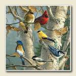 AbsorbaStone Coaster set~ Songbirds ~ 4 Tile Drink Coasters ~ code 356C